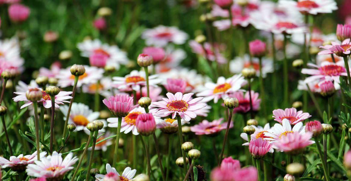 Visit Garden Centre